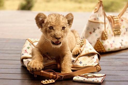 LV-LION.JPG
