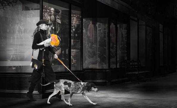 DogWalkHero_USAToday_noLogo[1][2].jpg
